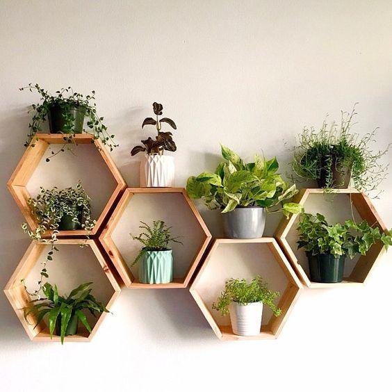 Chọn chậu cây kiểng treo tường bằng gỗ